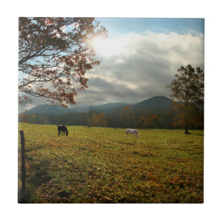 USA, Tennessee. Horses In Cades Cove Valley Tile