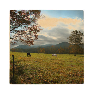 USA, Tennessee. Horses In Cades Cove Valley Wood Coaster