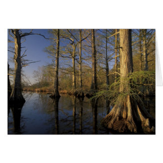 USA, Tennessee. Reelfoot National Wildlife Card