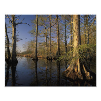 USA, Tennessee. Reelfoot National Wildlife Photo Print