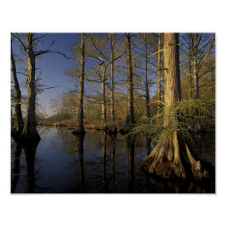 USA, Tennessee. Reelfoot National Wildlife Poster