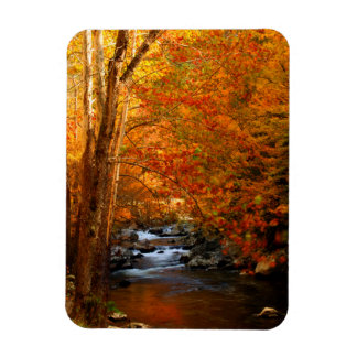 USA, Tennessee. Rushing Mountain Creek 2 Magnet