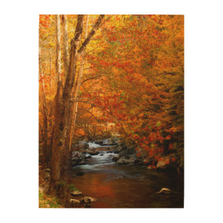 USA, Tennessee. Rushing Mountain Creek 2 Wood Wall Art