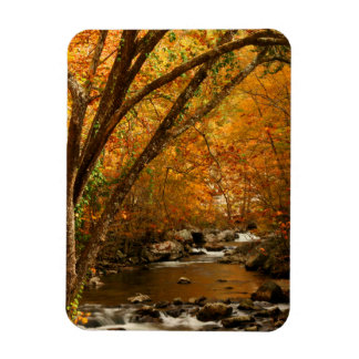 USA, Tennessee. Rushing Mountain Creek 3 Magnet