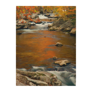 USA, Tennessee. Rushing Mountain Creek 4 Wood Wall Art