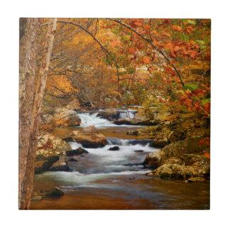 USA, Tennessee. Rushing Mountain Creek Tile