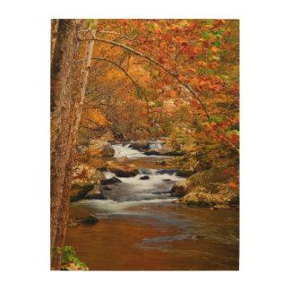 USA, Tennessee. Rushing Mountain Creek Wood Print