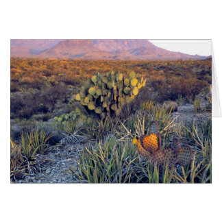 USA, Texas, Big Bend NP. A sandy pink dusk Card