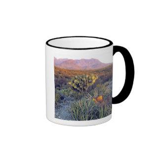 USA, Texas, Big Bend NP. A sandy pink dusk Mugs