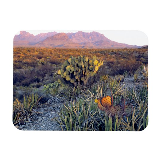 USA, Texas, Big Bend NP. A sandy pink dusk Rectangular Photo Magnet