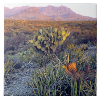USA, Texas, Big Bend NP. A sandy pink dusk Tile