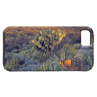 USA, Texas, Big Bend NP. A sandy pink dusk Tough iPhone 5 Case
