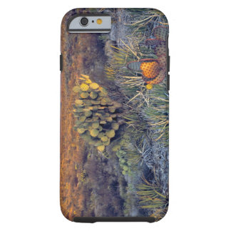 USA, Texas, Big Bend NP. A sandy pink dusk Tough iPhone 6 Case