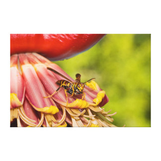 USA, Texas, Brownsville. Paper Wasps Canvas Print