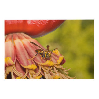USA, Texas, Brownsville. Paper Wasps Wood Canvas