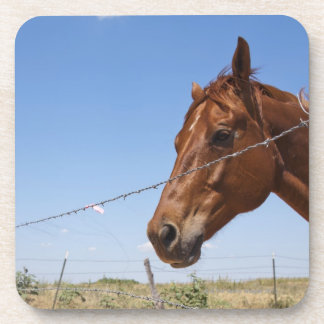 USA, Texas, Chillicothe, Horse stands beside Coaster