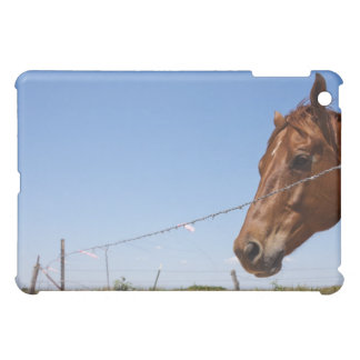 USA, Texas, Chillicothe, Horse stands beside Cover For The iPad Mini
