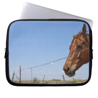 USA, Texas, Chillicothe, Horse stands beside Laptop Sleeve