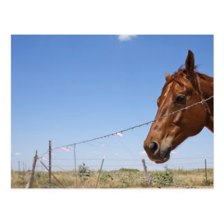 USA, Texas, Chillicothe, Horse stands beside Postcard