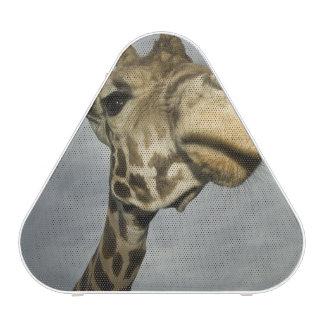 USA, Texas, Fossil Rim Wildlife Area, giraffe
