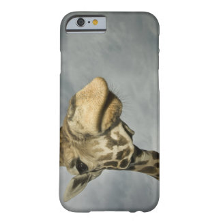 USA, Texas, Fossil Rim Wildlife Area, giraffe Barely There iPhone 6 Case