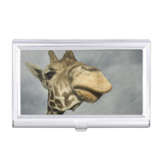 USA, Texas, Fossil Rim Wildlife Area, giraffe Business Card Holder