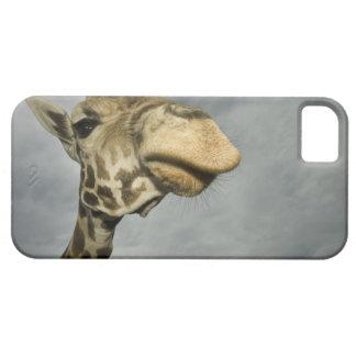 USA, Texas, Fossil Rim Wildlife Area, giraffe Case For The iPhone 5