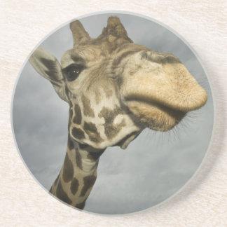 USA, Texas, Fossil Rim Wildlife Area, giraffe Coaster