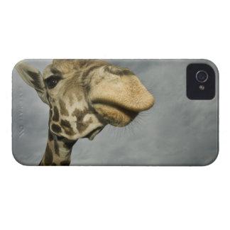 USA, Texas, Fossil Rim Wildlife Area, giraffe iPhone 4 Cover