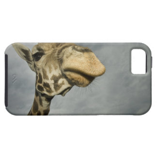USA, Texas, Fossil Rim Wildlife Area, giraffe iPhone 5 Cover