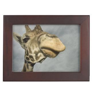 USA, Texas, Fossil Rim Wildlife Area, giraffe Keepsake Box