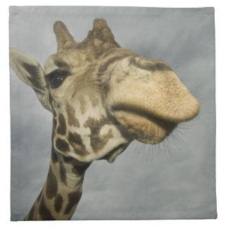USA, Texas, Fossil Rim Wildlife Area, giraffe Napkin