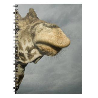 USA, Texas, Fossil Rim Wildlife Area, giraffe Notebook