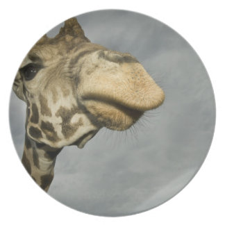USA, Texas, Fossil Rim Wildlife Area, giraffe Plate