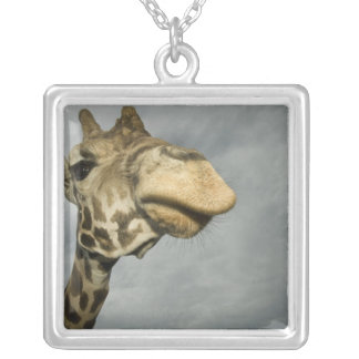 USA, Texas, Fossil Rim Wildlife Area, giraffe Silver Plated Necklace