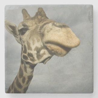 USA, Texas, Fossil Rim Wildlife Area, giraffe Stone Coaster