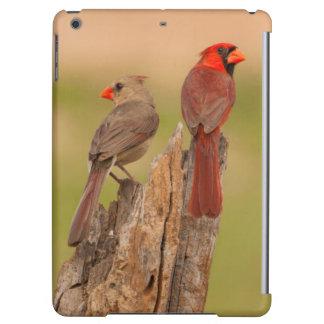 USA, Texas, Hidalgo County. Cardinal Pair Case For iPad Air