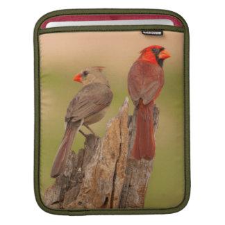 USA, Texas, Hidalgo County. Cardinal Pair iPad Sleeves