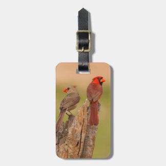 USA, Texas, Hidalgo County. Cardinal Pair Luggage Tag