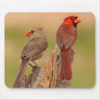 USA, Texas, Hidalgo County. Cardinal Pair Mouse Mat