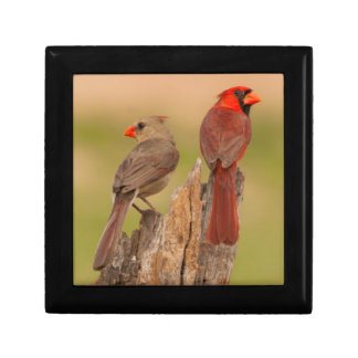 USA, Texas, Hidalgo County. Cardinal Pair Small Square Gift Box
