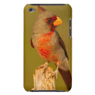USA, Texas, Hidalgo County. Close-Up Of Male Barely There iPod Covers