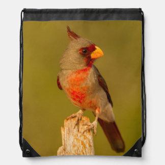 USA, Texas, Hidalgo County. Close-Up Of Male Drawstring Bag