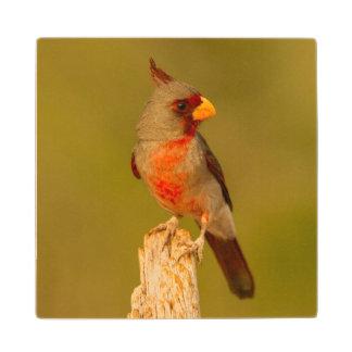 USA, Texas, Hidalgo County. Close-Up Of Male Wood Coaster