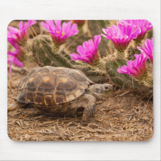 USA, Texas, Hidalgo County. Tortoise Mouse Mat
