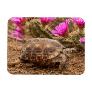 USA, Texas, Hidalgo County. Tortoise Rectangular Photo Magnet
