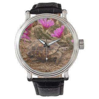 USA, Texas, Hidalgo County. Tortoise Wristwatches