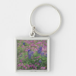 USA, Texas Hill Country. Bluebonnets among phlox Silver-Colored Square Key Ring