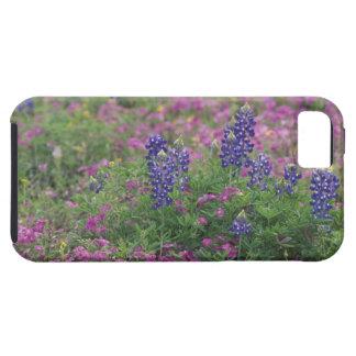 USA, Texas Hill Country. Bluebonnets among phlox Tough iPhone 5 Case