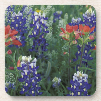 USA, Texas Hill Country. Bluebonnets and Beverage Coaster